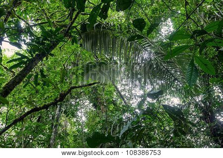 Tropical Plants, Amazonian Jungle