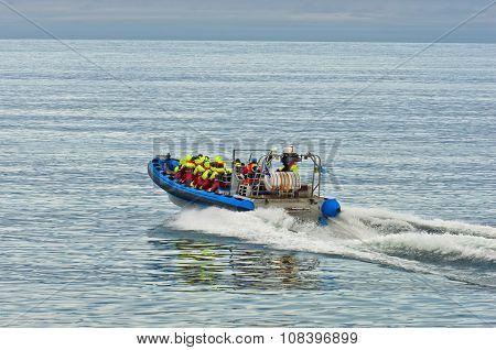 Whale watching tour from fast zodiac boat near Husavik