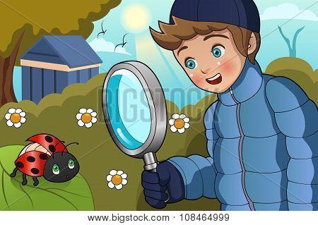 Boy Looking At Ladybug