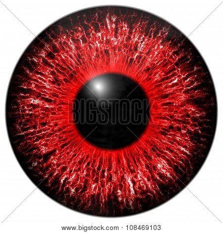 Red Eye Iris