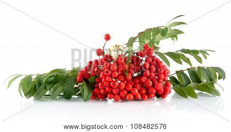 Rowanberry With Leaves Isolated On White Background