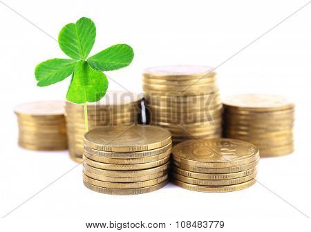 Clover leaf growing out of coins isolated on white