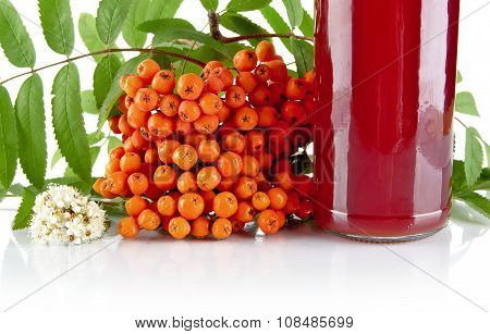 Studio shot of cropped orange rowanberry with blossom green leaves and jar of juice of rowanberry on white backgroun poster