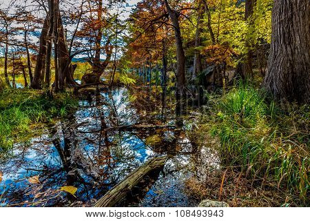 Bright Fall Colors of Garner State Park, Texas
