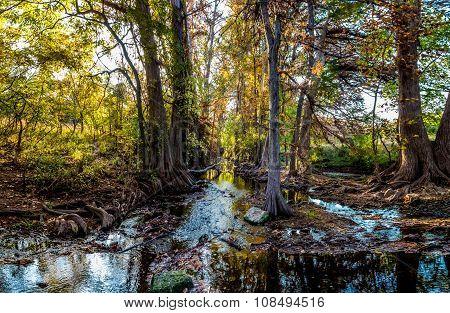 High Resolution Panoramic Shot of Fall Foliage on Cibolo Creek, Texas.