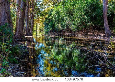 Bright Beautiful Fall Foliage On The Emerald Crystal Clear Frio River in Texas