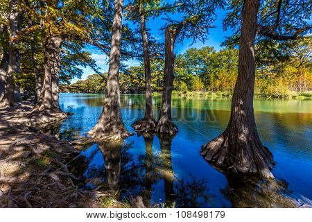 Bright Beautiful Fall Foliage On The Crystal Clear Frio River in Texas