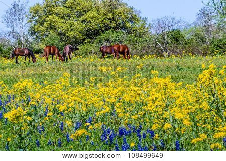 A Wide Angle View of a Texas Field of a Wide Variety of Bright Wildflowers and Brown Horses. poster