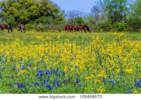 A Wide Angle View of a Texas Field of a Wide Variety of Bright Wildflowers and Brown Horses