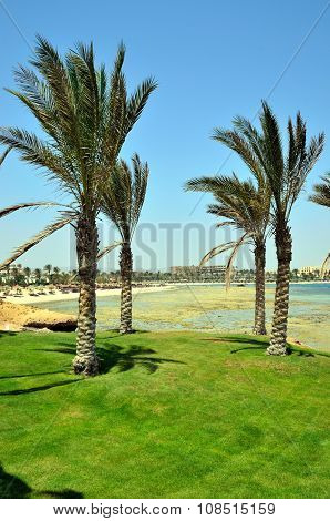Palm trees in a garden in Marsa Alam