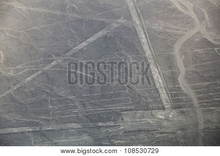 Aerial View Of Nazca Lines - Parrot Geoglyph, Peru.