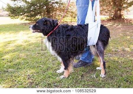 Injured Dog In Sling