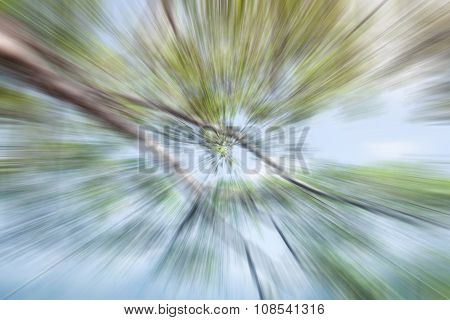 Abstract Motion Blur Of Branches Background