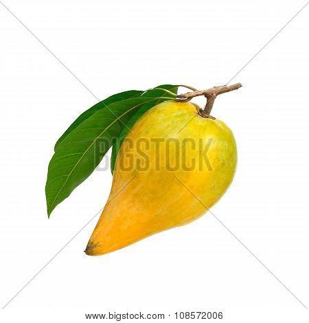 Yellow Fruit On White Background, Fresh Pouteria Campechiana Tropical Fruit In Asia