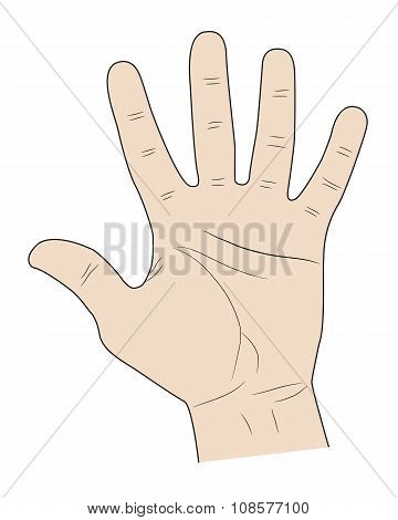 Five Fingers Of A Hand