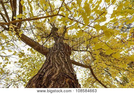 Vienna Stadpark yellow tree in November, Austria