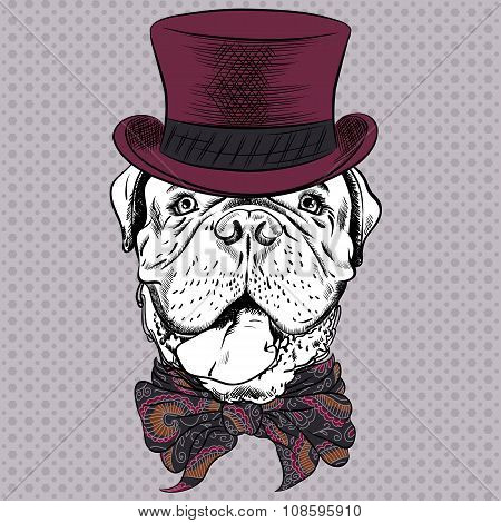 vector funny cartoon hipster dog French Mastiff