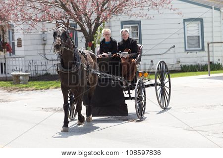 Two Amish Women In Buggy