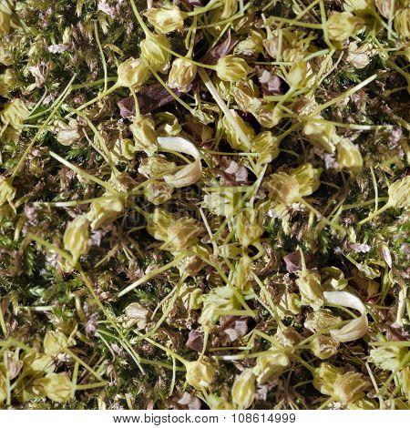 humus foliage Seamless Tileable Texture.
