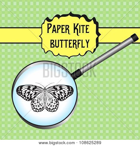 Butterfly Idea Leuconoe. Paper Kite . Sketch Of Butterfly. Butterfly In Magnifier