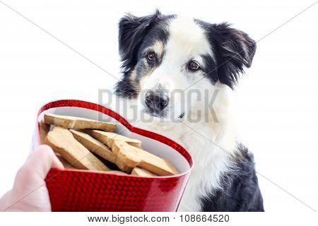 Dog Looks At Heart Shaped Box Of Treats