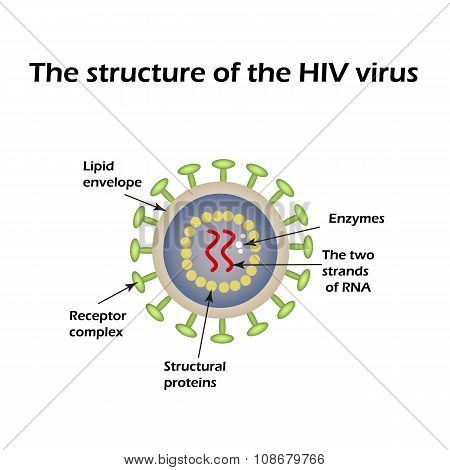 The structure of the AIDS virus. HIV. Vector illustration
