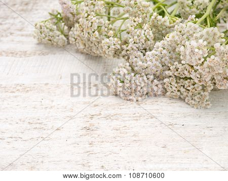 Milfoil Flowers Heap