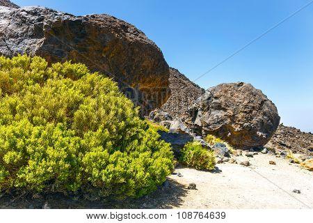 Volcanic bombs on Montana Blanca Teide National Park Tenerife Canary Islands Spain poster