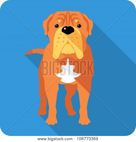 Vector serious dog French Mastiff or Dogue de Bordeaux  icon flat design poster