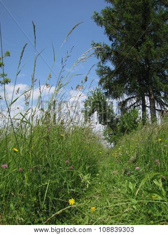 Beaten Path In Tall Unmowed Grass