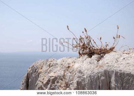 Shoal brushwood alone in the rock with sea and sky behind in Sardinian coast