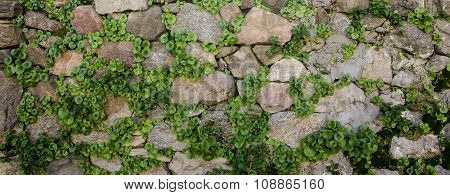 traditional wall made of stone and green grass between rocks in Sardinian ancient buildings