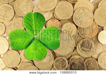 Clover leaf and euro coins, close-up