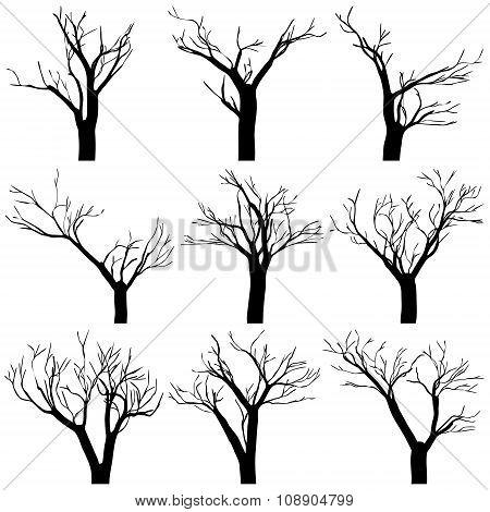 Set Black Trees