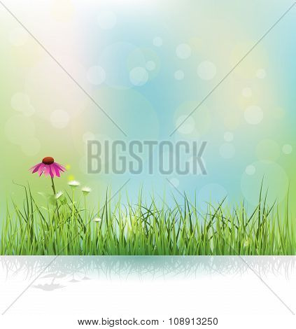 Vector illustration Spring nature field green grass white flowers meadow and echinacea