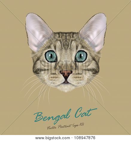 Vector Illustrated Portrait of grey Bengal Cat with blue eyes