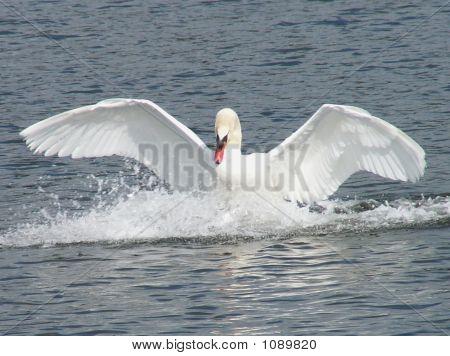 Swanl
