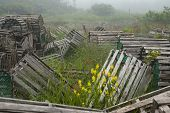 Scenic wooden lobster traps with blooming flowers on misty morning in coastal town of St. Mary's in Canadian province of Newfoundland and Labrador. Location is fishing village on Avalon Peninsula near Cape St. Mary's Ecological Reserve. poster
