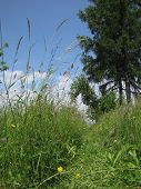 Beaten path in tall unmowed grass with tree and nice blue sky in back poster