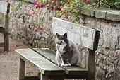 a cat sitting on a bench in scotland poster