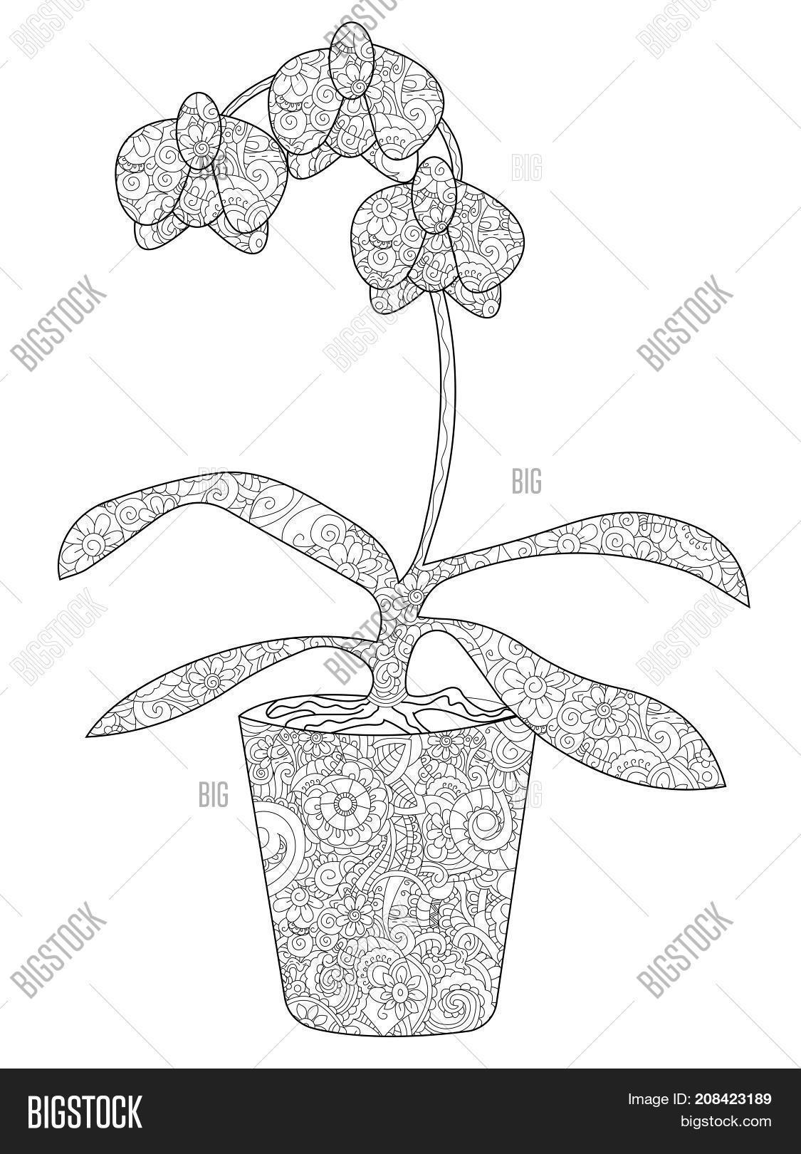 Flower Orchid In A Pot Coloring Book For Adults Raster Illustration Anti Stress