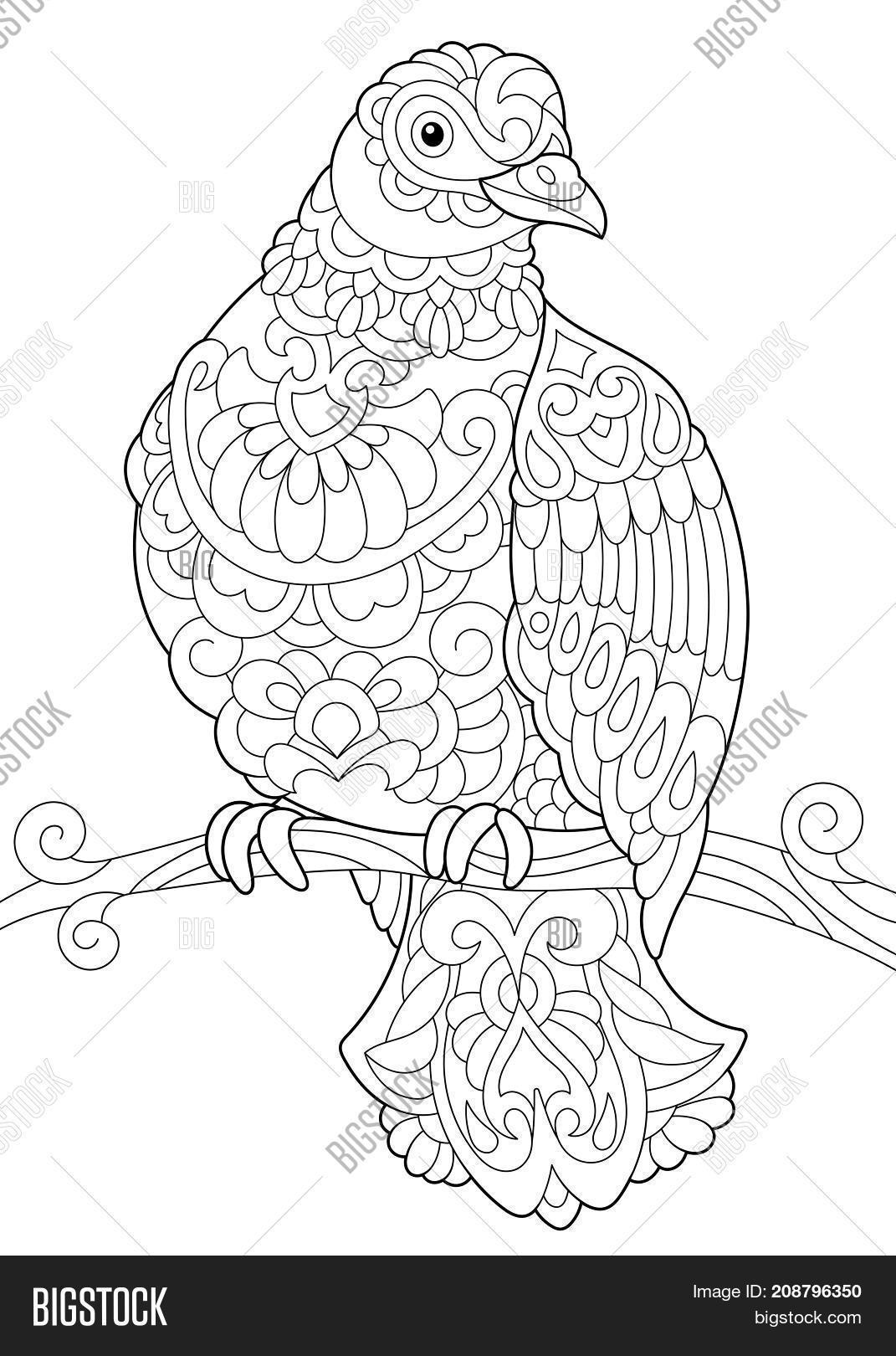 Coloring Page Dove ( Image & Photo (Free Trial) | Bigstock