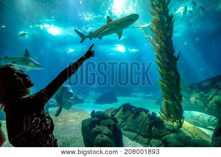 Caucasian blonde woman pointing a shark in oceanarium. Female tourist enjoying in ocean exhibit tank. Lisbon, Portugal. Tourism, holidays, lifestyle and leisure concept.