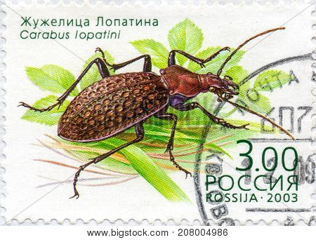 Ukraine - circa 2017: A postage stamp printed in Russia shows Beetle Carabus Lopatini series Insects circa 2003