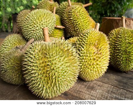 Fresh durian fruit. King of fruit which has specific smell.