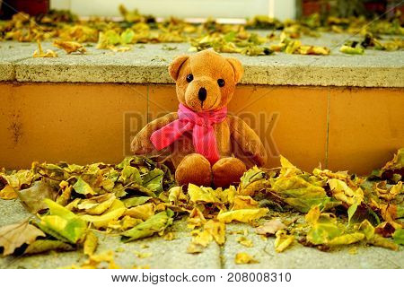 Teddy bear in the stairs with leafs in the garden in autumn.