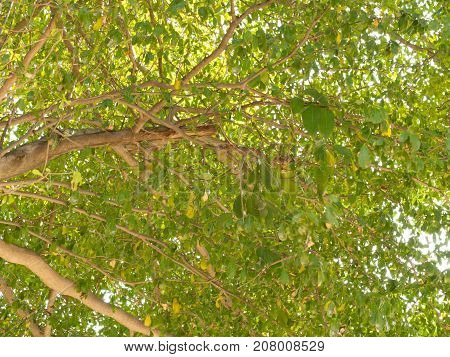 Green leaf branch on big tree in nature background.