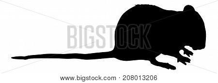 rat silhouette vector, rat high quality illustration
