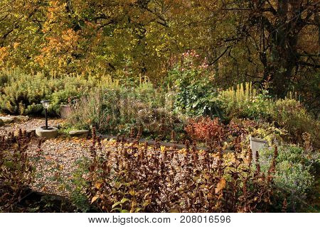Lining plants on a perennial bed. Colorful autumn in the home garden. Indian summer.