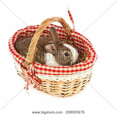 rabbit in a basket on a white background